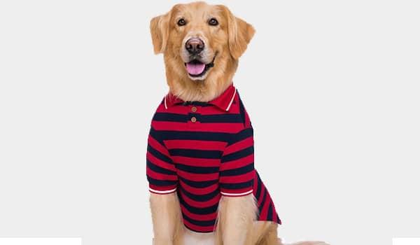 como hacer una camisa para perros